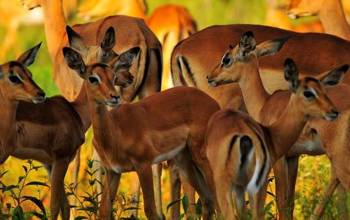 El Valor De La Fauna Salvaje Africana