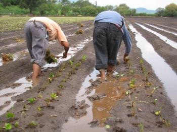 FAO Pide Innovar Para Frenar Cambio Climático