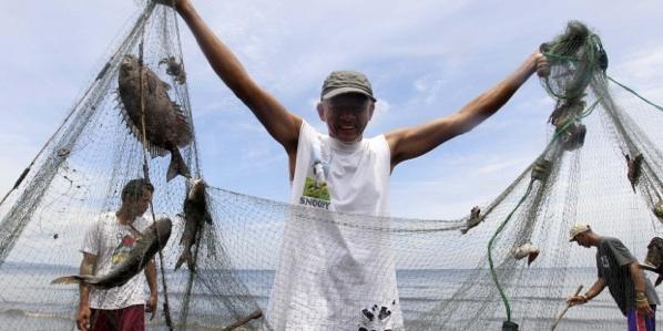 La Cadena Alimenticia Marina, Menos Eficiente Por El Cambio Climático