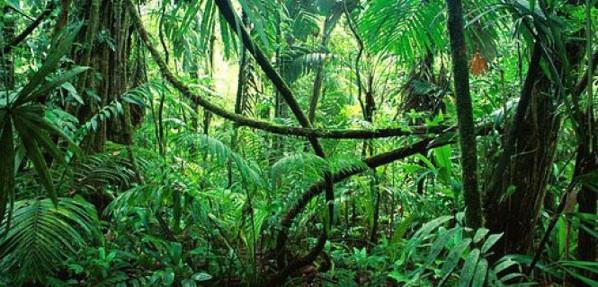Más Y Menos Bosques