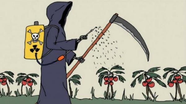 Comer Veneno: El Estado Reconoce Que Frutas Y Verduras Vienen Con Agroquímicos