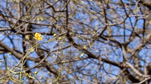 Córdoba Perdió 150 Mil Hectáreas De árboles En 12 Años