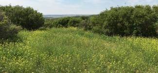 La Desertificación Se Acelera Por La Contaminación