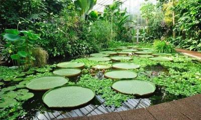 El Importante Trabajo De La UNAM En Preservar Especies