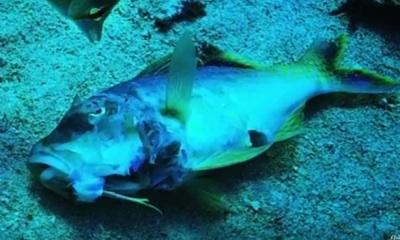 México: Estiman Que 26 Especies De Peces Están En Riesgo