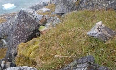Advierten Del Riesgo De La Invasión De Especies Vegetales En La Antártida