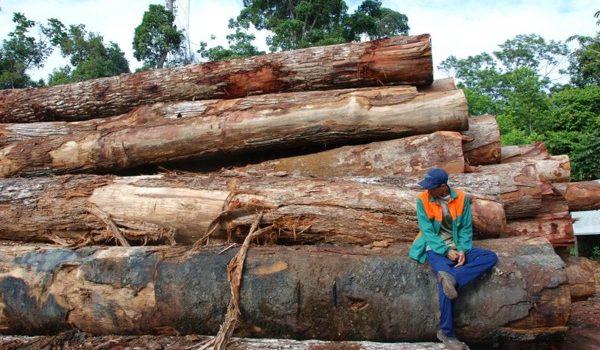 Brasil Abre La Puerta A Nuevos Planes Para Deforestar La Amazonia