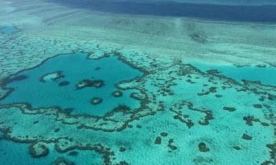 Confirman El Retroceso Inevitable Del Ecosistema De Coral