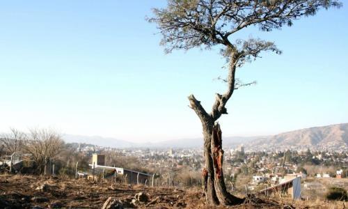 Córdoba: Científicos Rechazan Herramienta De Bosques
