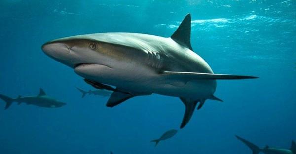 Dominicana: Prohíben Pesca De Tiburones, Rayas Y Erizos