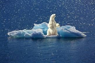 El Nivel De Mercurio En Los Osos Polares Disminuye Debido Al Cambio Climático