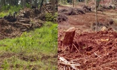 Misiones: Desmonte En Corredor Verde