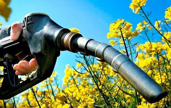 Proponen Plantación De Exóticas Para Combustibles