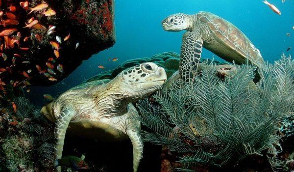 México Obtiene Nueva Certificación En Protección De Tortugas Marinas