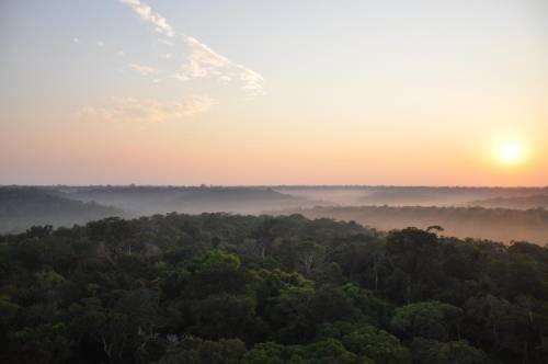 La Vegetación Cambia El Clima En Un 30 Por Ciento