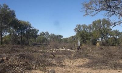Campesinos Denuncian Desmontes En El Norte Cordobes