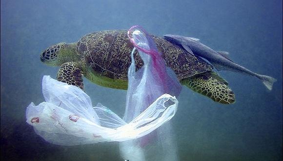 Científicos De Cuba Y Suiza Evaluarán Contaminación Por Plásticos En Costas Cubanas