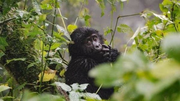 Preocupante: Ya Desapareció La Mitad De Los Animales Que Vivieron En La Tierra
