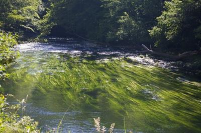 El Desinfectante Más Común Es Tóxico Para Los Ecosistemas Acuáticos