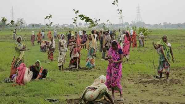 Nuevo Récord Guinness De Reforestación: En India Plantan 66 Millones De árboles En 12 Horas