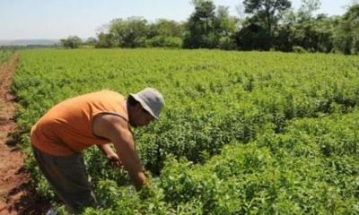 Agricultores En Los Estados Unidos Sufren Un Plaguicida