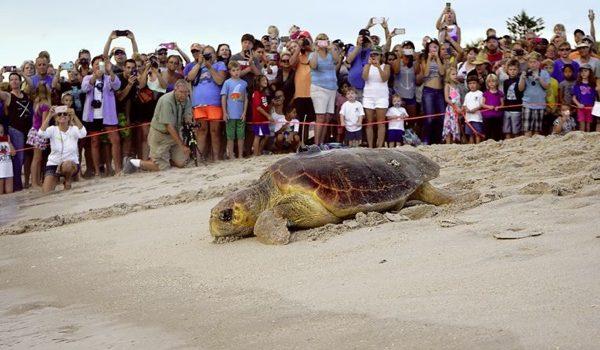 Certina, Un Paso Adelante Para El Cuidado Y La Protección De Las Tortugas