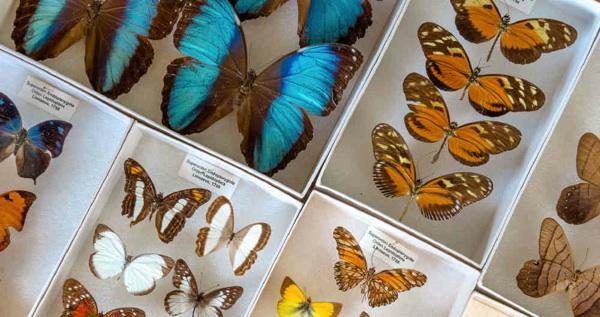 Una Expedición Histórica Por La Biodiversidad