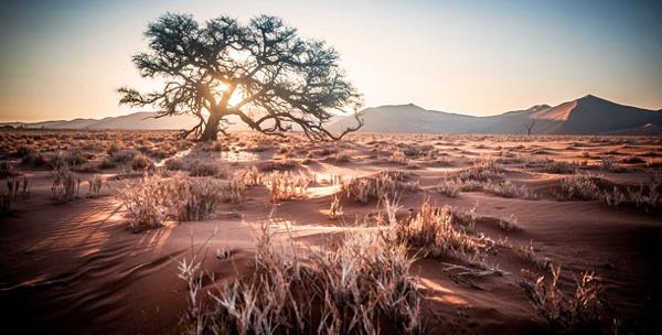 La Biodiversidad Se Encuentra Amenazada Debido Al Progreso