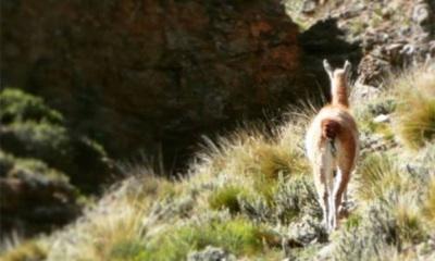 Mendoza Eleva Las Multas De La Ley De Fauna Silvestre