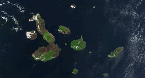 Fondo Mundial Para La Naturaleza Condena Pesca Ilegal China En Galápagos