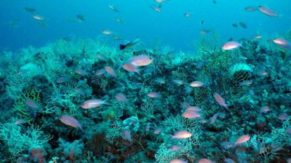 Alertan Sobre La Desaparición De Especies Marinas