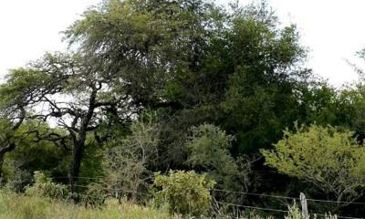 Córdoba: Rechazo Unánime De Las Universidades A La Ley De Bosques Nativos