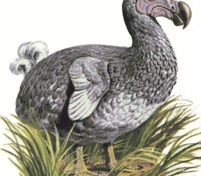 El Secreto Mejor Guardado Del Dodo