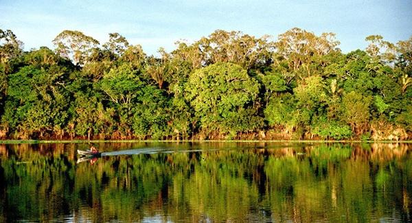 Ecuador Lanza Plan Para Proteger Sus Bosques Amazónicos Y Alentar Desarrollo Sostenible