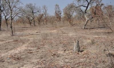 El Futuro De África Depende De La Protección De Tierras áridas