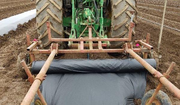 Produce Frambuesa Con Acolchado Plástico Biodegradable