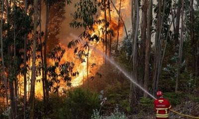 La Fauna Salvaje Agoniza Tras La Oleada De Incendios En Portugal