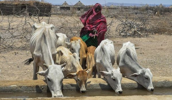 La Sequía Asfixia A Los Pastores Etíopes