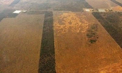 Paraguay Arrasa Sus Bosques Y Advierten Del Futuro