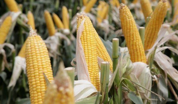 Por El Bioetanol, La Argentina Reduce Hasta Un 65 % Su Emisión De Gases De Efecto Invernadero