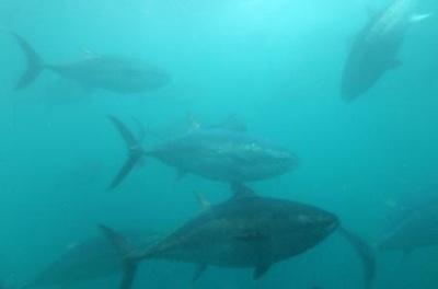 300 Especies Marinas Cruzan El Pacífico En Histórica Migración