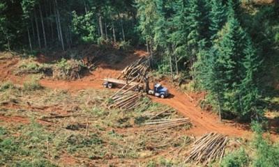 La Amazonía Peruana También Pierde Miles De Hectáreas