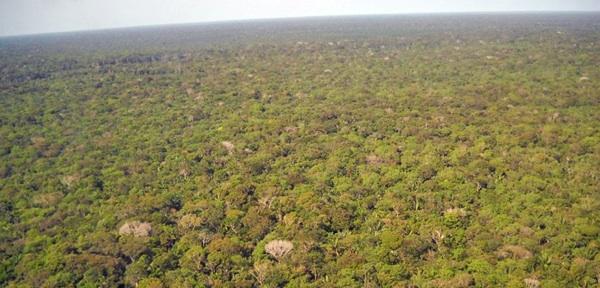 Los Bosques Tropicales Emiten Ahora Más Carbono Del Que Captan