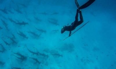Experto Avisa De Consecuencias De Pescar Más De 100 Millones De Tiburones/año