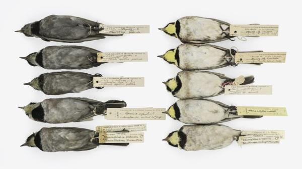 La Contaminación Del Pasado Está Escrita En Los Pájaros