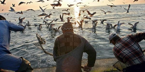 Redes De Pesca En Europa Matan 200.000 Aves Al Año