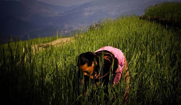 La FAO Lanza Una Guía Para Adaptar La Agricultura Al Cambio Climático