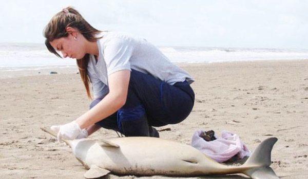 Hallan Delfines Sin Vida En Las Playas De La Costa Bonaerense