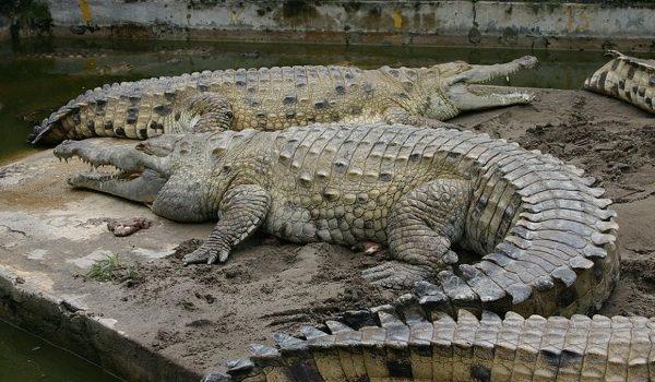 """UICN Pide Celeridad Para Sacar De """"riesgo"""" A 17.000 Especies En Todo El Mundo"""