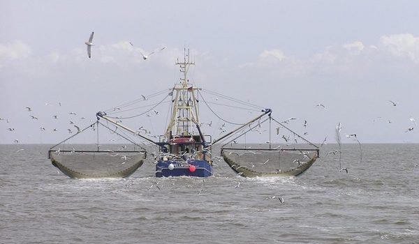 Tecnologías Verdes Que Podrían Cambiar La Industria Pesquera